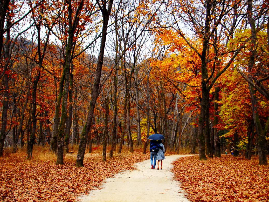 Đảo Nami Hàn Quốc mùa thu lãng mạn